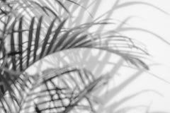 阴影棕榈叶抽象背景在白色墙壁上的 免版税库存照片