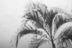 阴影棕榈叶抽象背景在水泥粗砺的纹理墙壁上的 免版税图库摄影