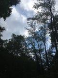 阴影森林 库存图片
