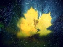 影片作用 从槭树的五颜六色的打破的叶子在玄武岩石头在山河中被弄脏的水 秀丽风景 经纪 免版税库存照片