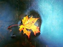 影片作用 秋天颜色 在溜滑玄武岩石头的下落的枫叶在发烟性水中 山小河小瀑布冷水  库存照片