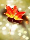 影片作用 秋天颜色 在溜滑玄武岩石头的下落的枫叶在发烟性水中 山小河小瀑布冷水  免版税库存照片