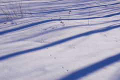 阴影蓝色条纹在白色雪的 免版税图库摄影