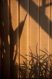 阴影通过窗帘 免版税库存图片