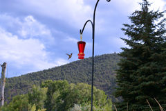 往馈电线的蜂鸟飞行 库存图片