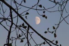 往满月的月亮 免版税库存图片