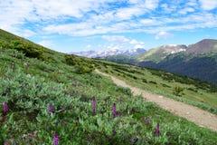 往从未夏天山的路在科罗拉多 免版税库存图片