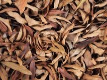 很多下落的叶子 免版税库存照片