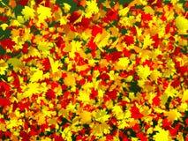 很多五颜六色的秋叶 免版税图库摄影