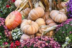 很多南瓜和干草装饰秋天产品明亮的后面 免版税库存图片