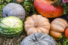 很多南瓜和干草装饰秋天产品明亮的后面 免版税图库摄影