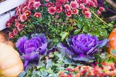 很多圆白菜和花装饰秋天产品明亮的b 库存图片