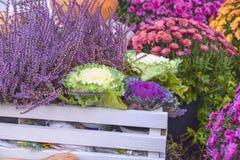 很多圆白菜和花装饰秋天产品明亮的b 免版税库存照片