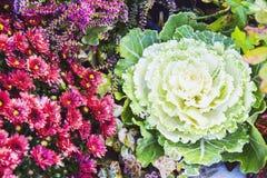很多圆白菜和花装饰秋天产品明亮的b 库存照片