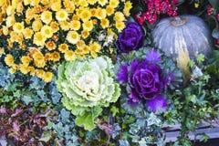 很多圆白菜和花装饰秋天产品明亮的b 免版税图库摄影