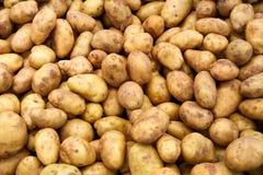很多土豆 库存图片