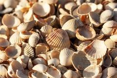 很多小壳在一个地方 库存图片