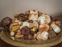 很多新鲜的牛肝菌蕈类蘑菇 库存图片