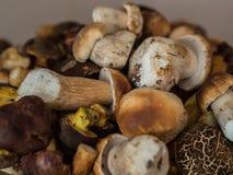 很多新鲜的牛肝菌蕈类蘑菇 免版税库存图片