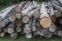 很多木材木头 库存照片