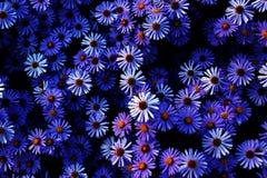 很多紫色花 免版税库存照片