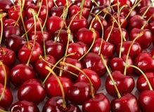 很多红色成熟樱桃 免版税库存照片