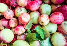 很多绿色红色有机新鲜的甜苹果 免版税库存图片