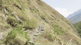 很多背包徒步旅行者在尼泊尔山的道路走 马纳斯卢峰电路艰苦跋涉 股票视频