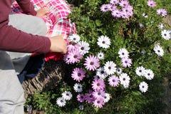 很多雏菊花和手touchs他们 库存图片