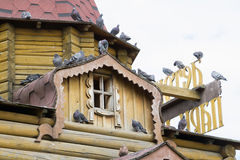 很多鸽子坐房子屋顶  免版税库存照片