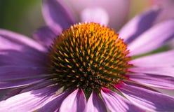 很多他们,紫色花 免版税库存图片