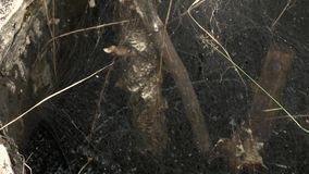 很好有很多毒性油液体和黄色甲虫步行通过蜘蛛网 影视素材
