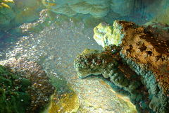 很好祝愿与在Luray洞穴的硬币 免版税图库摄影