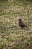很孤独的鸟 免版税库存图片