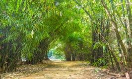很美丽道路竹的森林 免版税库存照片