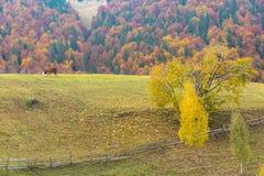 很远在山秋天风景的母牛 免版税库存照片