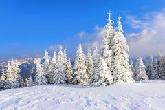 很远在用白色雪立场盖的高山在不可思议的雪花的少量绿色树 免版税库存图片
