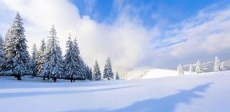 很远在用白色雪立场盖的高山在不可思议的雪花的少量绿色树 免版税库存照片