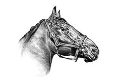 徒手画的马头铅笔图 图库摄影