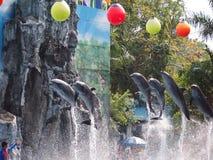 徒步旅行队世界动物园 免版税库存图片