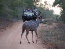 徒步旅行队别动队员和监视人卡车的有羚羊的 库存图片