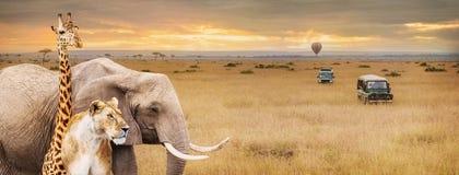 徒步旅行队动物非洲场面网横幅 库存照片