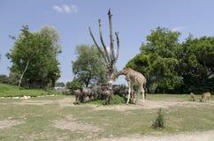 徒步旅行队动物 免版税图库摄影