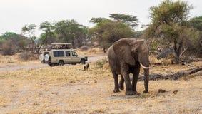 徒步旅行队吉普注意的大象的游人 免版税库存图片