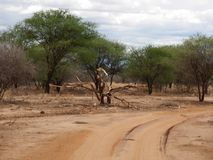 徒步旅行队在非洲Tarangiri-Ngorongoro 库存照片