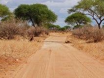 徒步旅行队在非洲Tarangiri-Ngorongoro 免版税库存图片
