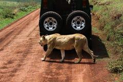 徒步旅行队在非洲 库存图片