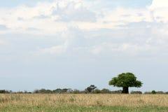 徒步旅行队横向。 坦桑尼亚,非洲 免版税图库摄影
