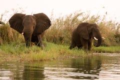 徒步旅行队津巴布韦 库存照片