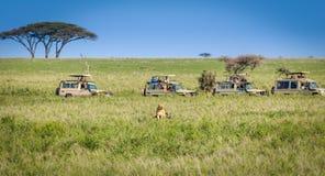 徒步旅行队狮子观看 库存照片